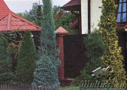 Хвойное украшение сада