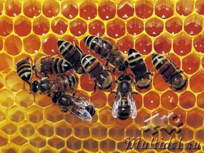 Пчелиные дары человеку