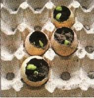 Огурцы в скорлупе
