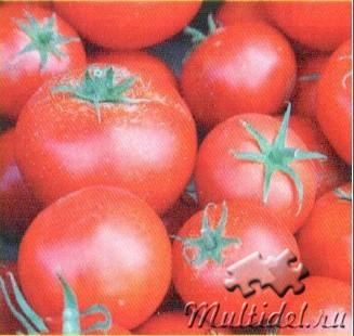 О томатах