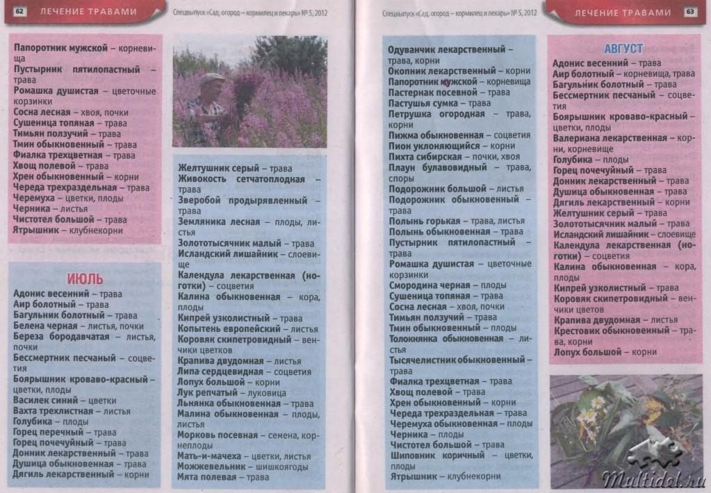 Календарь сбор трав для чая