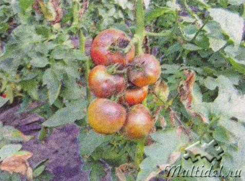Болезни растений:  распознаем и лечим