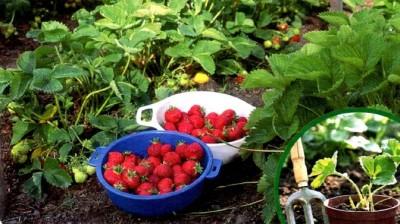 Советы для садоводов