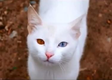 Котоюмор